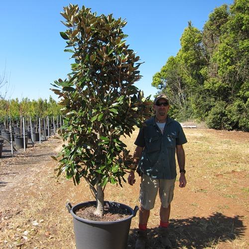 Simone chiennes mature magnolia tree masturbation experience